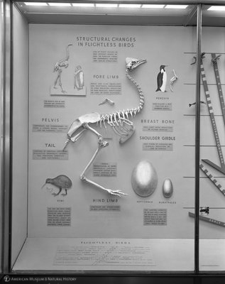 http://images.library.amnh.org/d/t/8x10/0001/00318754_l.jpg