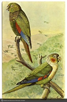 http://lbry-web-002.amnh.org/san/AMNH_postcards/100213323_11.jpg
