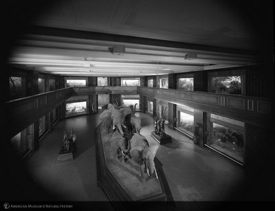 http://images.library.amnh.org/d/t/8x10/0002/00329879_l.jpg
