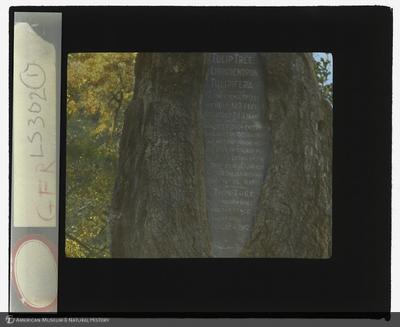 http://lbry-web-002.amnh.org/san/to_upload/lanternslides/LS302001.jpg
