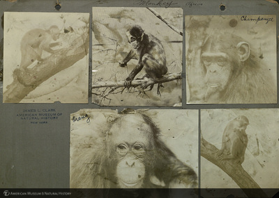 http://lbry-web-002.amnh.org/san/mo_exhibition/ppc_533_b03_f057_014.jpg