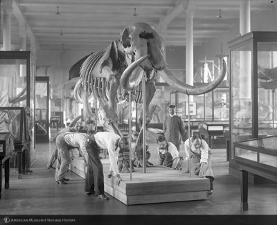 http://images.library.amnh.org/d/t/8x10/0001/00031739_l.jpg
