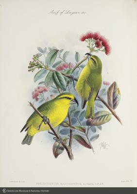 http://lbry-web-002.amnh.org/san/to_upload/extraordinarybirds/b10595077_5.jpg