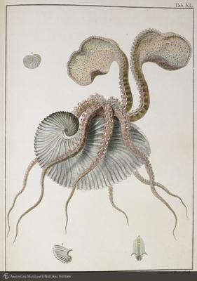 http://lbry-web-002.amnh.org/san/naturalhistories/b10874689_1.jpg