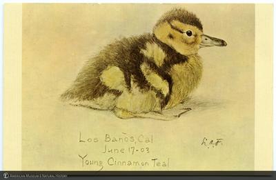 http://lbry-web-002.amnh.org/san/AMNH_postcards/100213323_13.jpg