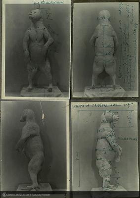 http://lbry-web-002.amnh.org/san/mo_exhibition/ppc_533_b08_f161_002.jpg