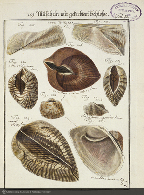 http://lbry-web-002.amnh.org/san/naturalhistories/b10657605_4.jpg