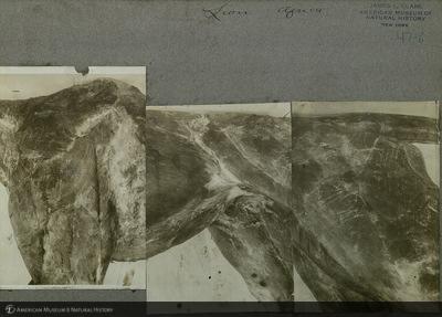 http://lbry-web-002.amnh.org/san/mo_exhibition/ppc_533_b02_f047_006.jpg