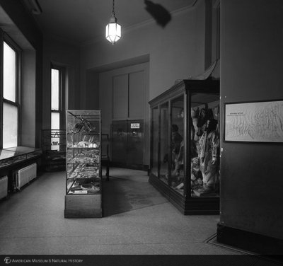 http://images.library.amnh.org/d/t/8x10/0002/00326947_l.jpg