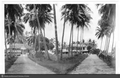 http://lbry-web-002.amnh.org/san/to_upload/Beck-PapuaNewGuinea/NG-5x7-prints/115661.jpg