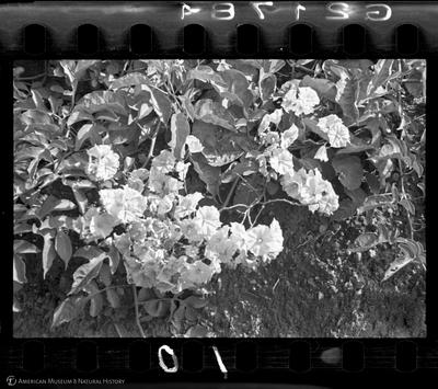 http://lbry-web-002.amnh.org/san/to_upload/35mm/VHC-S010.jpg