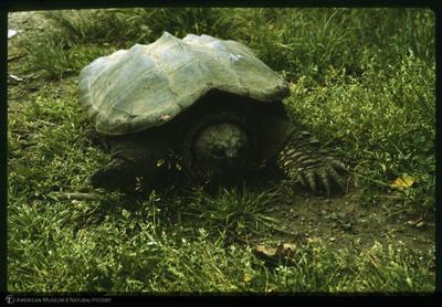 http://lbry-web-002.amnh.org/san/to_upload/35mm/K12682.jpg