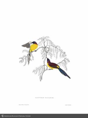 http://lbry-web-002.amnh.org/san/to_upload/extraordinarybirds/b1042281x.jpg