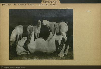 http://lbry-web-002.amnh.org/san/mo_exhibition/ppc_532_b06_f100_031.jpg