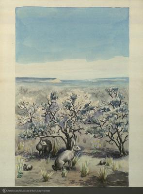 http://lbry-web-002.amnh.org/san/mo_exhibition/art003_b1_32.jpg