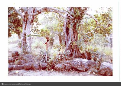 http://lbry-web-002.amnh.org/san/photoprintcollections/Arth/ppc-a78-100213278-19.jpg