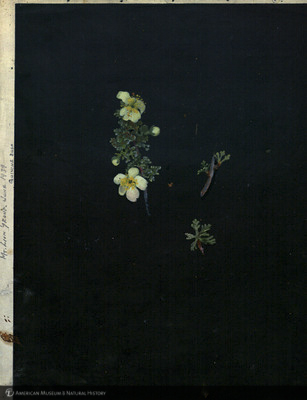 http://lbry-web-002.amnh.org/san/mo_exhibition/art003_b2_06.jpg