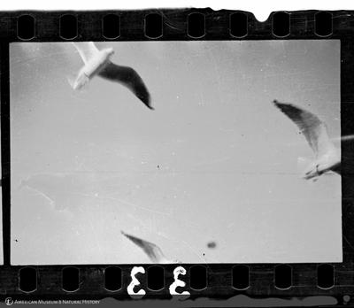 http://lbry-web-002.amnh.org/san/to_upload/35mm/VHC-B033.jpg