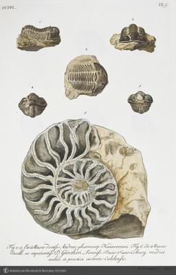 http://lbry-web-002.amnh.org/san/naturalhistories/b10533151_6.jpg