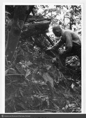http://lbry-web-002.amnh.org/san/to_upload/Beck-PapuaNewGuinea/NG-5x7-prints/115590.jpg