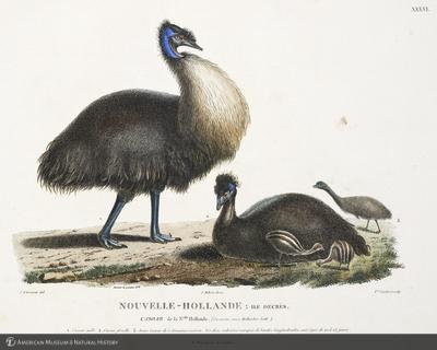 http://lbry-web-002.amnh.org/san/naturalhistories/b11429859_4.jpg