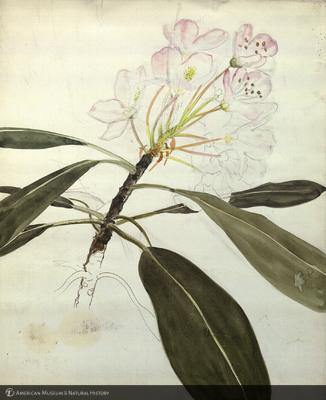 http://lbry-web-002.amnh.org/san/mo_exhibition/art003_b2_02.jpg