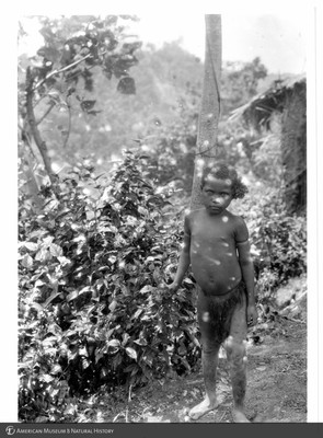 http://lbry-web-002.amnh.org/san/to_upload/Beck-PapuaNewGuinea/NG-5x7-prints/115763.jpg