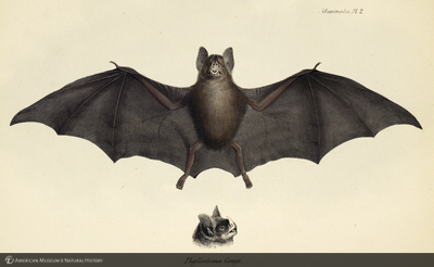 http://lbry-web-002.amnh.org/san/naturalhistories/b10187236_2.jpg