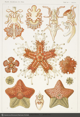 http://lbry-web-002.amnh.org/san/naturalhistories/b10528283_7.jpg