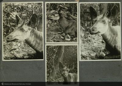 http://lbry-web-002.amnh.org/san/mo_exhibition/ppc_533_b03_f065_005.jpg