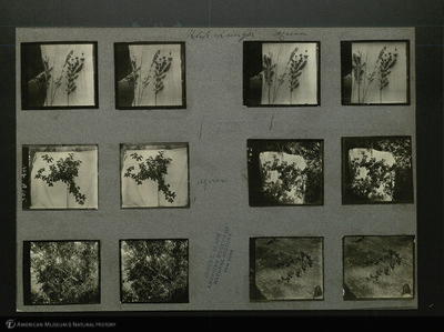 http://lbry-web-002.amnh.org/san/mo_exhibition/ppc_533_b11_f246_002.jpg