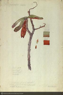 http://lbry-web-002.amnh.org/san/mo_exhibition/art002_b1_10.jpg